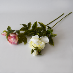 Pivónia krém/ružová 67cm