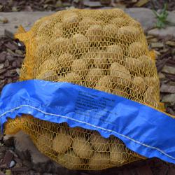 Zemiaky sadb. SORAYA 5kg