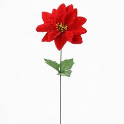 Vianočná ruža červená ks