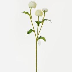Ranunculus x3 biel/červ