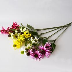 Echinacea 73cm mix 5FA