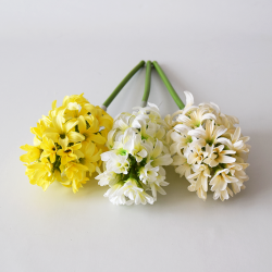 Hyacint mix farby