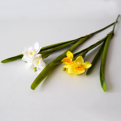 Narcis žltý/biely 55cm